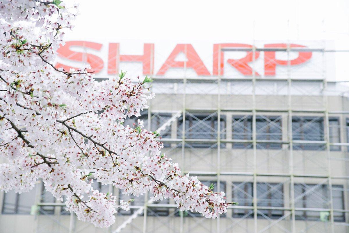 さよならシャープ旧本社…92年の歴史に幕。最後の桜と共に撮影してきました