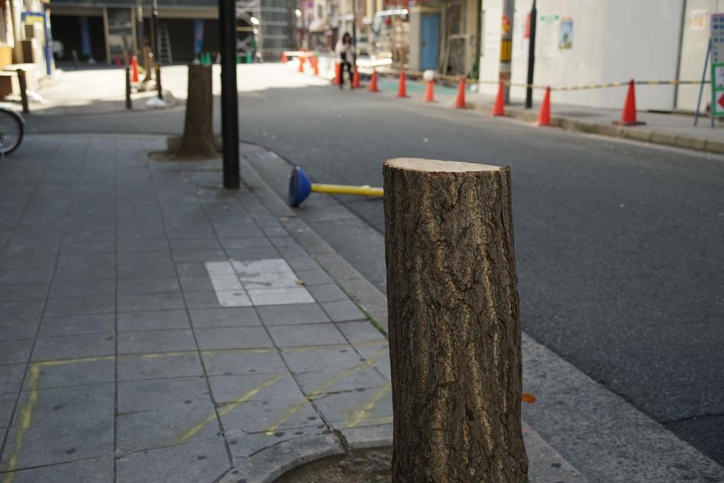 最近、大阪市中の木がぶった切られてる件